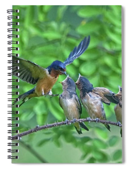 Barn Swallow Feeding Spiral Notebook