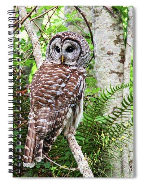 Barred Owl Hunting In Alder Forest Spiral Notebook