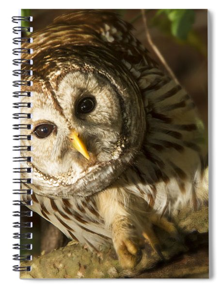 Barred Owl Peering Spiral Notebook