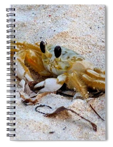 Beach Crab Spiral Notebook