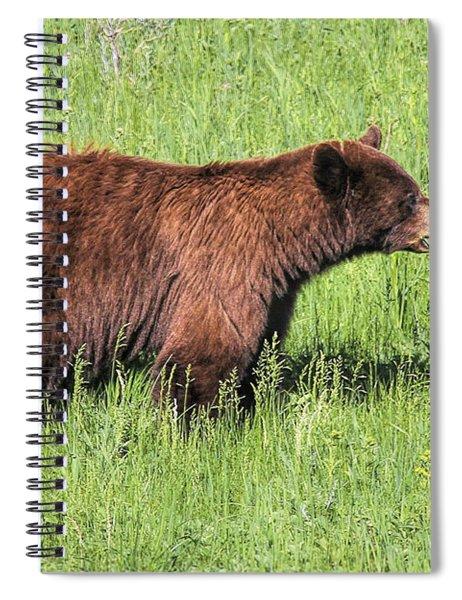 Bear Eating Daisies Spiral Notebook