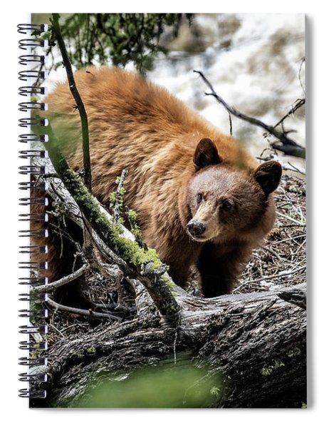 Spiral Notebook featuring the photograph Bear In Trees by Scott Read