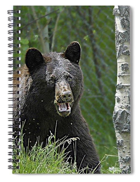Bear In Yard Spiral Notebook
