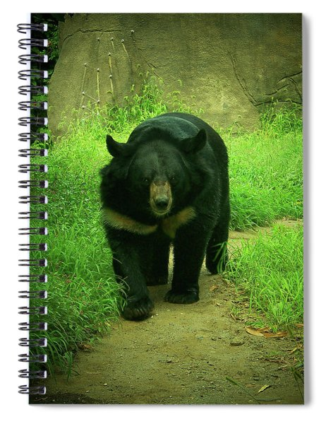 Bear On The Prowl Spiral Notebook