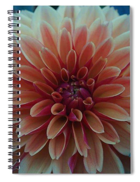 Beautiful Dahlia 3 Spiral Notebook