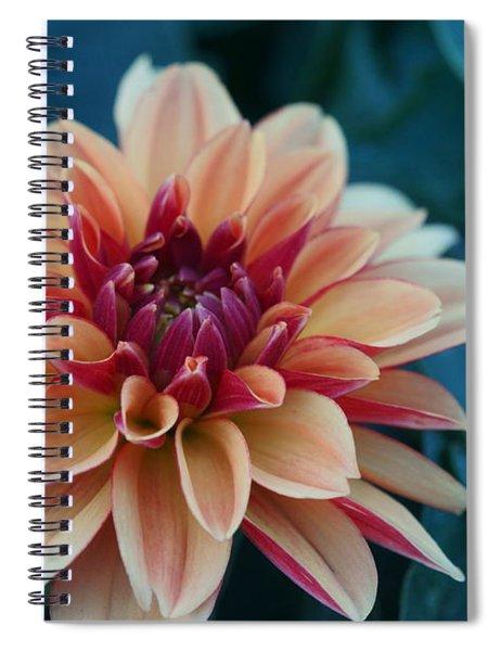 Beautiful Dahlia 4 Spiral Notebook
