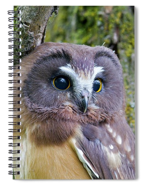 Beautiful Eyes Of A Saw-whet Owl Chick Spiral Notebook