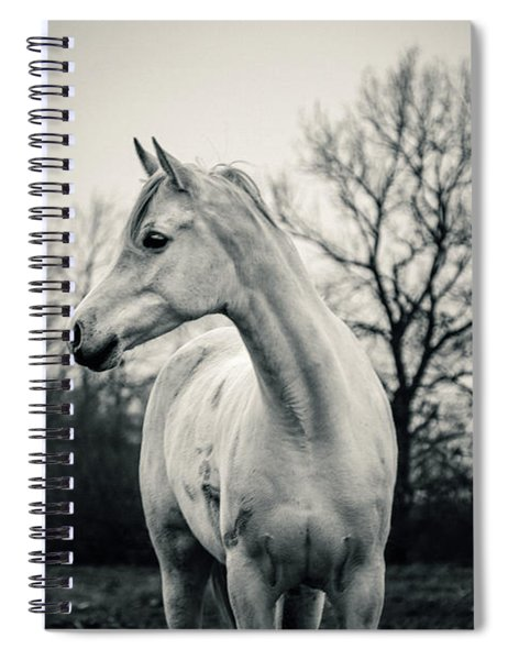 Beautiful Lonely White Horse IIi Spiral Notebook