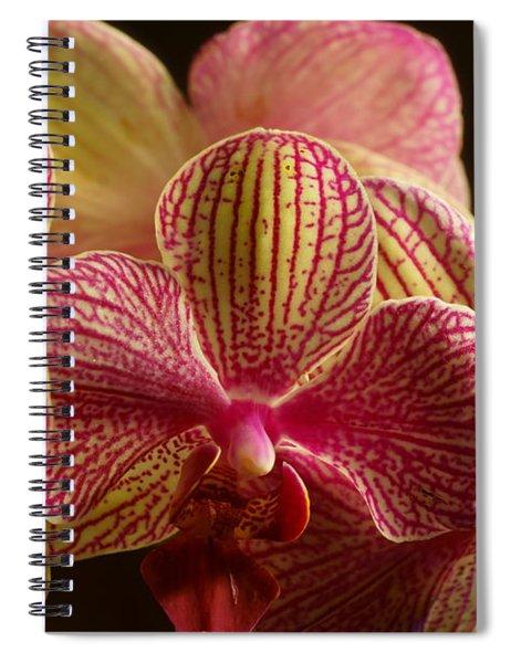 Beauty Up Close 1 Spiral Notebook
