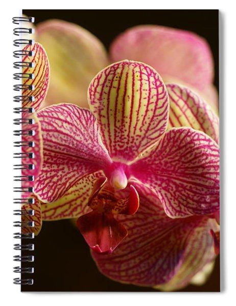 Beauty Up Close 3 Spiral Notebook