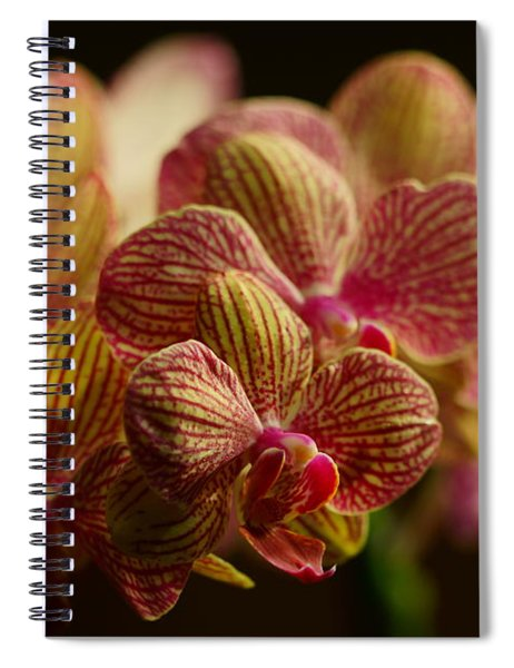 Beauty Up Close 5 Spiral Notebook