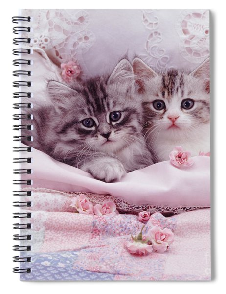 Bedtime Kitties Spiral Notebook