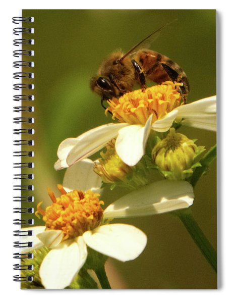 Bee Among Daisies Spiral Notebook