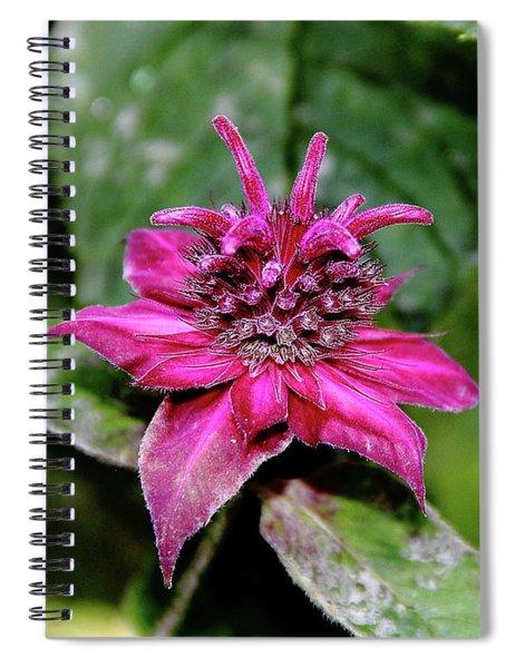 Bee Balm Beauty Spiral Notebook