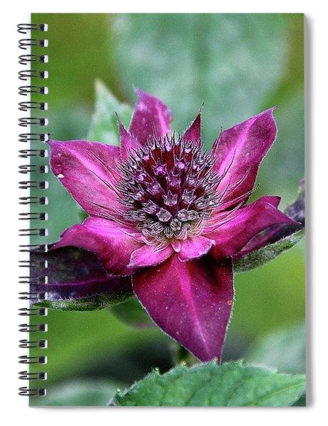 Bee Balm Exuberance Spiral Notebook
