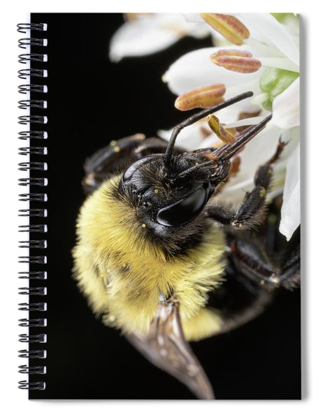 Bee Macro 1 Spiral Notebook