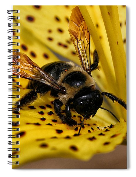 Bee On A Lily Spiral Notebook