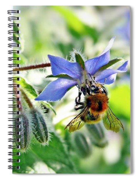 Bee On Borage Spiral Notebook