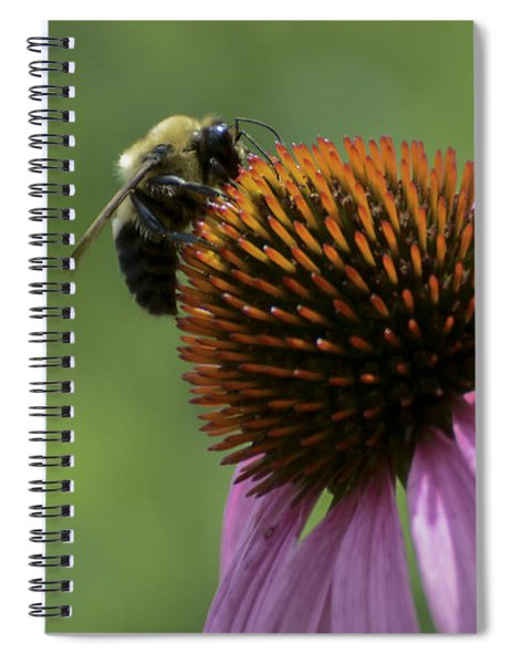 Bee On Coneflower Spiral Notebook
