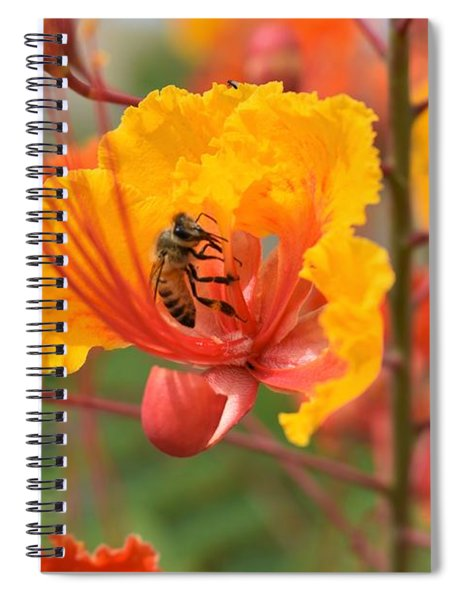 Bee Pollinating Bird Of Paradise Spiral Notebook