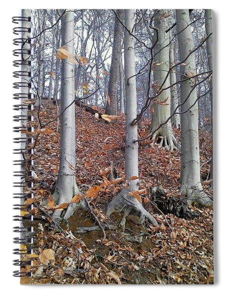 Beech Trees Spiral Notebook