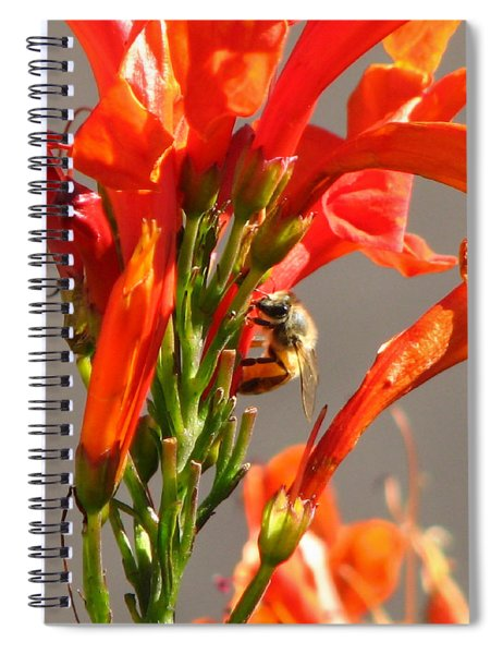 Day In A Life Of A Bee Spiral Notebook