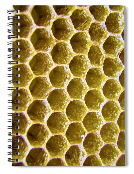 Bee's Home Spiral Notebook
