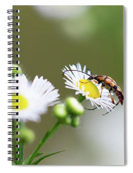 Beetle Daisy Spiral Notebook