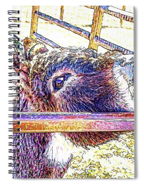 Begging For Attention Spiral Notebook