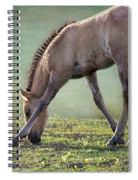 Bella's Filly And A Friend Spiral Notebook