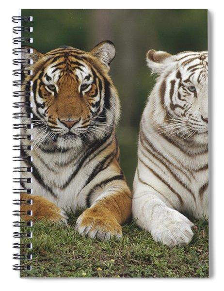 Bengal Tiger Team Spiral Notebook