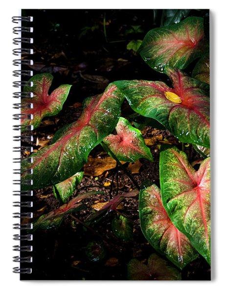Bicolor Caladium Spiral Notebook
