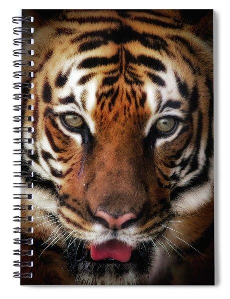 Big Cat Stare Down Spiral Notebook