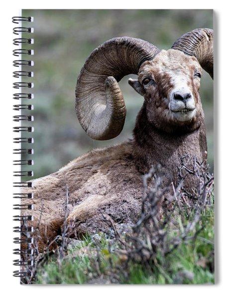 Spiral Notebook featuring the photograph Big Horn Sheep #3 by Scott Read