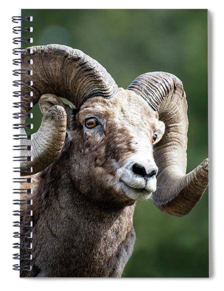 Big Horn Sheep Spiral Notebook by Scott Read