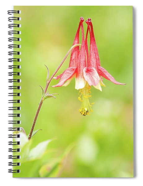Big Meadows Columbine Spiral Notebook