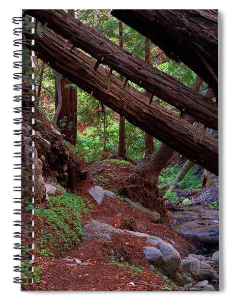 Big Sur Redwood Canyon Spiral Notebook