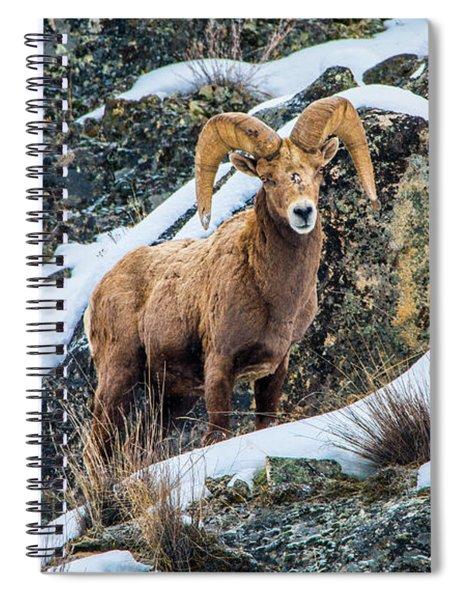 Bighorn Ram 3 Spiral Notebook