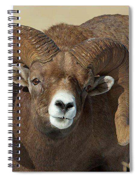 Bighorn Ram In Montana Spiral Notebook