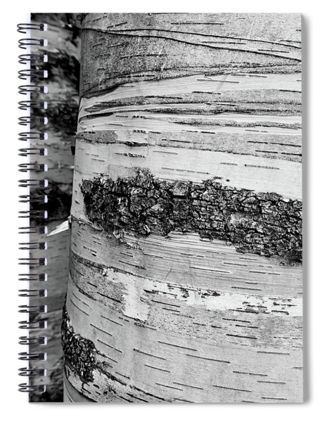 Spiral Notebook featuring the photograph Birch Tree 1 by Heather Kenward