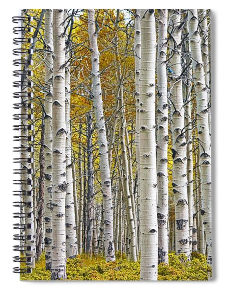 Birch Tree Grove With A Touch Of Yellow Color Spiral Notebook