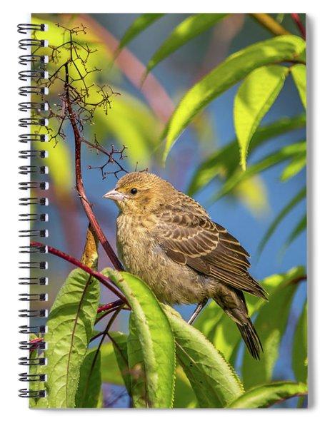 Bird Bush Blue Sky Spiral Notebook