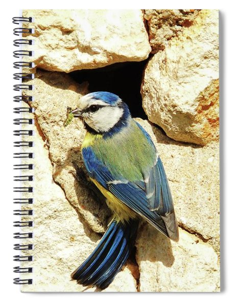 Bird Feeding Chick Spiral Notebook