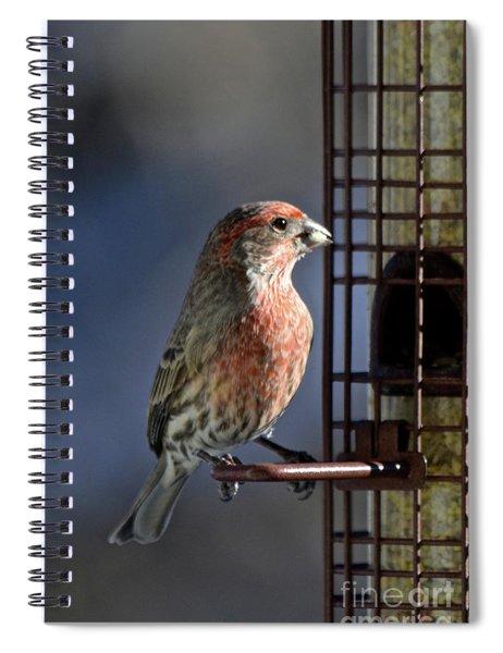 Bird Feeding In The Afternoon Sun Spiral Notebook