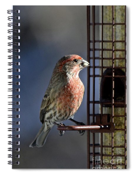 Bird Feeding In The Afternoon Sun Spiral Notebook