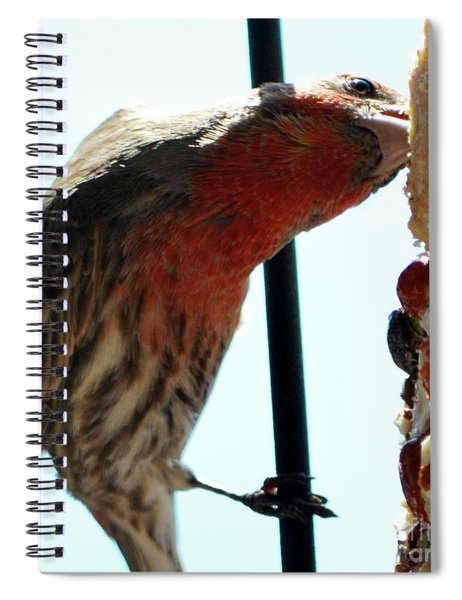 Bird Hits The Jackpot Spiral Notebook