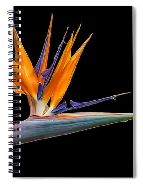 Bird Of Paradise Flower On Black Spiral Notebook