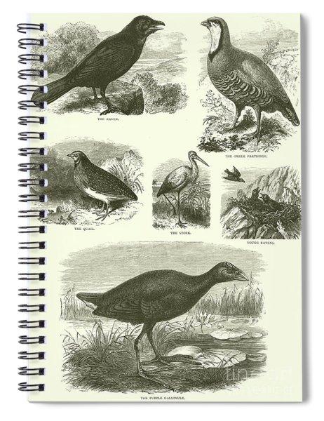 Birds Of Palestine  Spiral Notebook