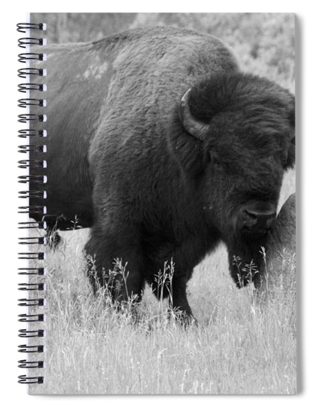Bison And Buffalo Spiral Notebook