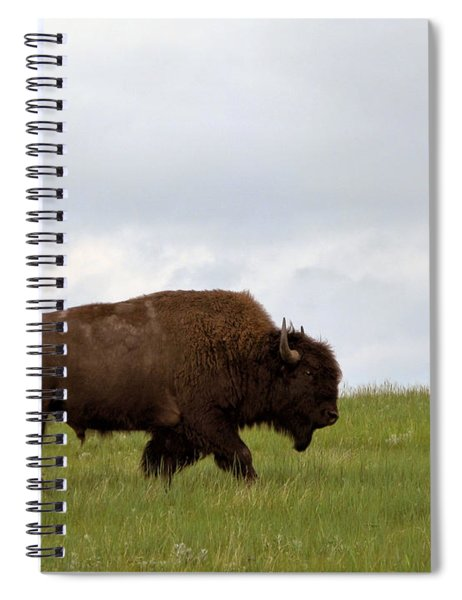 Bison On The American Prairie Spiral Notebook